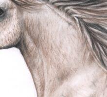 Arabian Stallion Sticker