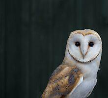 Barn Owl portrait by dulciemaephotos