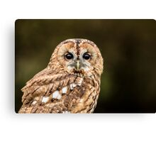 Tawny Owl portrait Canvas Print
