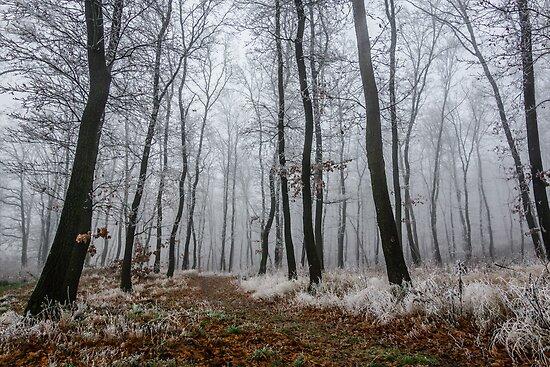 Frosty walk by tamás klausz