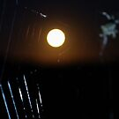 Spider At Night by Liz Worth