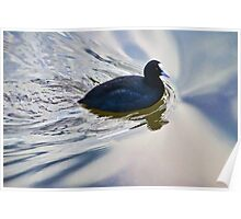 Coot In The Swirls Poster
