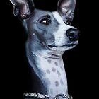 Italian Greyhound Portrait by Madcowontherun