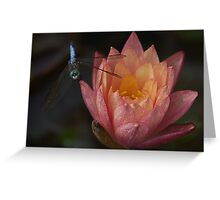 Dragon Fly and Water Lily Greeting Card