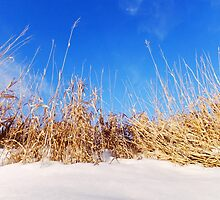 Prairie Grass in Winter by Karen  Rubeiz