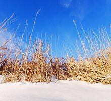 Prairie Grass in Winter by Karen  Rubeiz