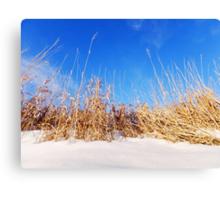 Prairie Grass in Winter Canvas Print