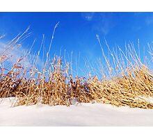 Prairie Grass in Winter Photographic Print