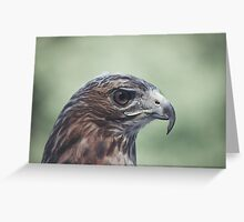 Portrait of a Red Tail Greeting Card
