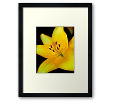 Bright yellow lily Framed Print