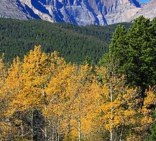 Autumn Aspens and Longs Peak by Bo Insogna