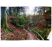 Pretty Afternoon Walk At Yeovil Somerset UK Poster