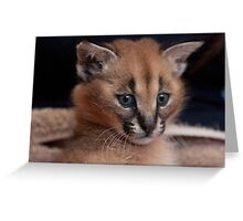 Baby Caracal, Conservators Center, NC Greeting Card