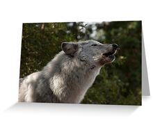 Hopa the Grey Wolf, Conservators Center, NC Greeting Card