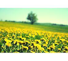 yellow paradise Photographic Print