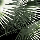 Shapes of the Tropics by Ellen Cotton