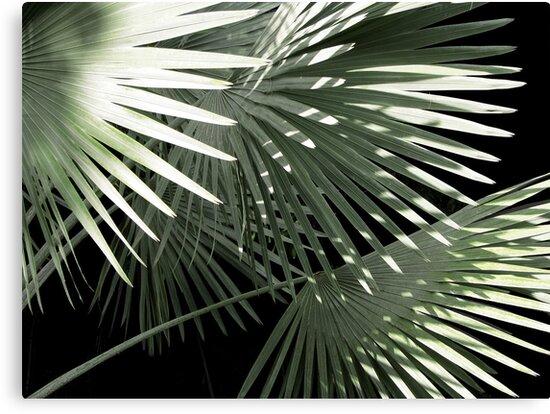 Shapes of Hawai'i by Ellen Cotton
