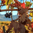 Autumn In The Wine Country by James Eddy