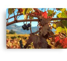 Autumn In The Wine Country Canvas Print