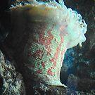 Sea Anemone by Jeanie93