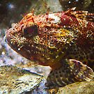Ugly Red Fish by Jeanie93