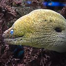 Green Moray Eel by Jeanie93