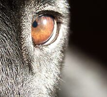 Eye catch by Satine
