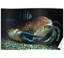 Giant Stone Crab  Poster