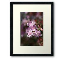 flower-small-pink Framed Print