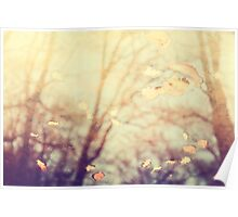 Nature's Golden Reflections Poster