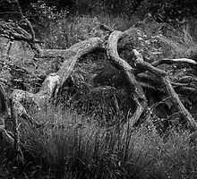 Fallen Tree - B&W by Paul Croxford