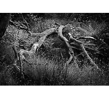 Fallen Tree - B&W Photographic Print