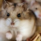 Chibby Hamsters! by Keala