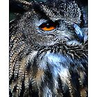Owl by MoGeoPhoto