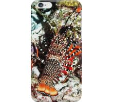 Caribbean Spotted Spiny Lobster at Night iPhone Case/Skin