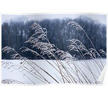 Frozen Grass in a Snowy Landscape Poster