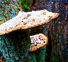 Fungus Cliff by Raymond Park