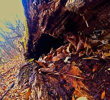 Tree Tunnel by Raymond Park