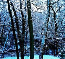 The Four Trees by Raymond Park