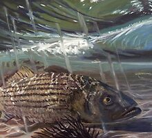 Striped Bass in the Surf by Robert Sullivan