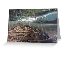 Striped Bass in the Surf Greeting Card