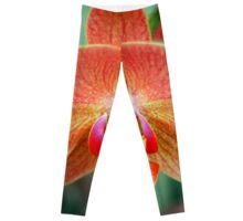 Orange Orchid Leggings