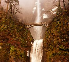 Multnomah  by •Kim Reiten•