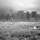central park first snow NYC December 2013 BW by Danny  Daly