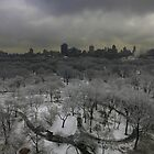 central park in snow by Danny  Daly
