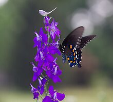 Flutter of Innocence by Dawn Beck
