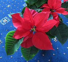 A Poinsettia for Christmas by kathrynsgallery