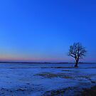 lone tree by cliffordc1