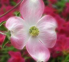 Pink Dogwood by Kathie McCurdy