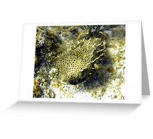 Bridled Golden Burrfish Greeting Card